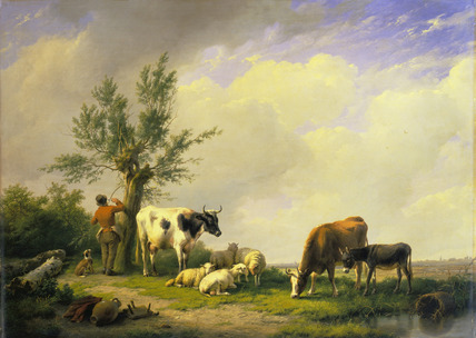 Sheep and Cows