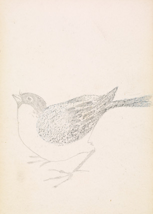 Sketchbook - Bird, Finch or Bunting