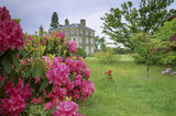 Close view of a pink rhododendron in the North Garden with rough grass beside it and a lawn and a diagonal view of the house beyond