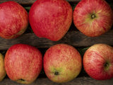 Close-up of rosy red apples in a storage rack at Acorn Bank