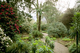 Path through the Dell at Trelissick, Cornwall, with tree ferns and rhododendrons and echiums along the path