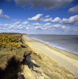 Looking along the curving Dunwich Heath, topped with golden gorse, with a gentle surf breaking on the sandy beach