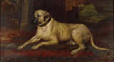 LADY (also known as Lion), one of the last of the breed of Lyme mastiffs painted by J.T.Nettleship (1847-1902).