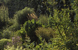 Sunlight on the herb border at Felbrigg Hall