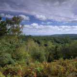 View across Hindhead Common in Surrey