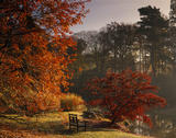 A wooden bench is set near an Acer palmatum by the Upper Womans Way Pond at Sheffield Park