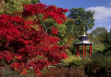 A deep red acer dominates this view of the Water Gardens at Cliveden in autumn