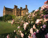 "Rosa ""Pink Parfait"" with the house in the background at Chartwell, Kent, the family home of Sir Winston Churchill from 1922 until 1965"