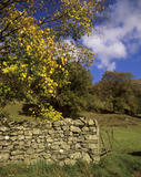 Chapel Stile, Cumbria, in a dry stone wall, beside a six bard gate, left open