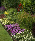 "A colourful summer border in Nymans Garden, with ageratum ""Blue Blazer"", dahlia ""Cherry Wine"", petunia ""Sun Summer"", verbena ""White"", salvia ""Rhea"" and statice"