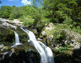 A view of Aira Force Falls at Ullswater Valley in the Lake District, with water rushing over moss-covered stones