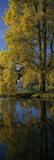 "A vertical panoramic view of ""The Pantheon"", the largest garden building at Stourhead, taken from across the east end of the lake and through a golden-leaved ""Tulip Tree"" in Autumn"