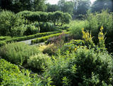 The herb garden in the East Walled Garden at LLanerchaeron, back lit with the evening sun