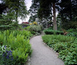 Path winding through the garden at Trelissick