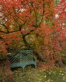 The brillant red foliage of Continus Coggygria cradling a painted wooden seat