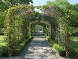 The Judas Tree (Cercis) Archway in the Four Seasons Walled Garden in Buscot Park, a path leads to the central lily pond with its fountain statue