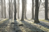 The Poplar Avenue lit by a low winter sun on the estate at Sissinghurst Castle Garden, near Cranbrook, Kent