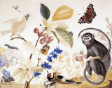 A `WEST INDIAN LITTLE BLACK MONKEY' WITH BIRDS, BUTTERFLIES AND FLOWERS by Sarah Lethieullier, Lady Fetherstonhaugh (1725- 1788) in the Red Drawing Room at Uppark