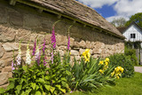 Foxgloves and yellow irises grow alongside a courtyard building with Lower Brockhampton House in the background, the medieval manor house on the Brockhampton Estate in Worcestershire