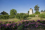 The fourteenth-century Great Tower from the Orchard and rose hedge at Greys Court, Henley-on-Thames, Oxfordshire