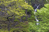 The craggy woodland of Troutdale on the east flank of Borrowdale, Lake District, Cumbria