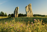 Avebury: Two large standing stones with wild flowers in fore- ground