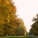 View of an avenue of brightly coloured autumnal trees on the Ashridge Estate, leading into the distance