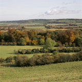 View above the Coombe on the Ashridge Estate, showing trees in autumnal colours and shades