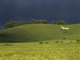 Distant view of Cherhill White Horse cut into the chalk downs