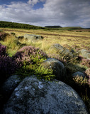 A view N. towards Hathersage Moor and Higger Tor from open moorland north of Burbage Brook