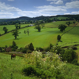 A view of farmland in the Malden Hills near Dunchideock, Devon