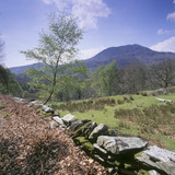 The estate runs to 170 ha (420 acres) which comprises of semi- natural woodland and mire with adjacent agricultural land