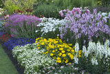 Close view of the annuals and perennials in one of the borders in the Wall Garden at Nymans, West Sussex