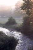 Acorn Bank at Dawn with misty sunshine pouring through the trees