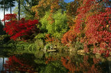 Brilliantly coloured foliage in the Water Garden at Cliveden, with the scene reflected in the still water