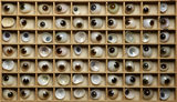 Glass eyes in a wooden display case in the 1870s house at the Birmingham Back to Backs