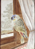 `POLLY THE PARROT, AGED 40' a watercolour by Miss Chichester, hanging in the Gallery
