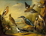 A painting of birds as taken from a set of 9, included are a Kingfisher and a Chaffinch, by Charles Collins, 1736