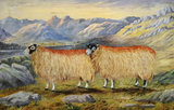 View of Windemere and Langdale Pikes with Two Swaledale Ewes