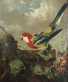 Parakeet with Grapes and Hollyhocks
