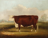 Hereford Cow: 1852