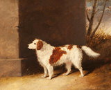 The Favourite Dog of Lord Charles Vere Ferrers Townshend