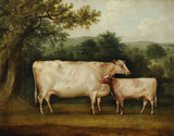 A Prize Cow and Calf in a Rural Wooded Landscape