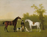 Two Horses, 'Prophet' and 'Sunrise', John Boultbee (1753-1812)