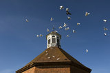 Doves and the roof of the ocatgonal Dove-house, Felbrigg Hall, John Millar