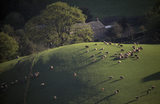 Cumbria, Eskdale, farm at Boot from Little Barrow with rolling green hills with sheep on the summit