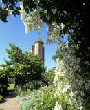 The Sissinghurst Tower, looking from behind a flowering bush