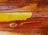 Close shot of the bark of Arbutus 'Marina' at Nymans Gardens