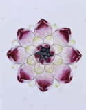 Lotus flower painted on the base of the Chinese Porcelain dish in the Library at Melford Hall