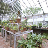 View of the Conservatory at Sunnycroft, showing a variety of plants and flowers